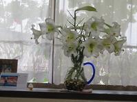 真っ白な百合をいっぱい。 - Tumugitesigoto4419's Blog