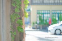 もう少し。 - Yuruyuru Photograph