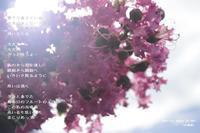 共鳴器 - 陽だまりの詩