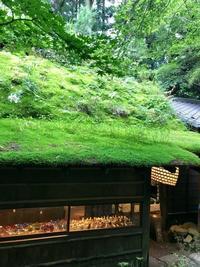 苔が綺麗だった♡ - 小さな庭 2