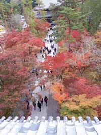 秋の京都へ女子旅はいかが? - 熊本の旅行会社 ゆとり旅