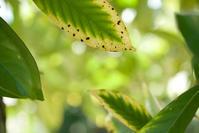 leaf - ナナイロノート