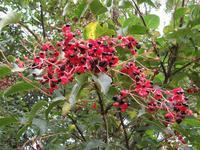 【第7回霞ヶ浦自然観察会「平地に咲く秋の花小池城址を訪ねる」を開催します。】 - ぴゅあちゃんの部屋