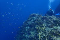19.8.31今日も今日とて - 沖縄本島 島んちゅガイドの『ダイビング日誌』