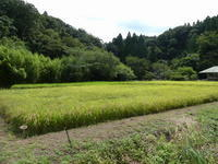 稲刈り準備 / 赤とんぼ - 千葉県いすみ環境と文化のさとセンター