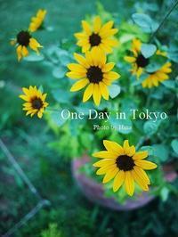 8月最後の、One Day in Tokyo - Cucina ACCA