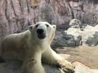 【3日目なう】白クマもバテる暑い仙台! - よく飲むオバチャン☆本日のメニュー