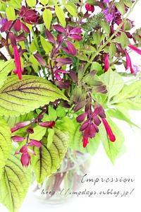 庭の花 - Impression Days