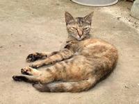 猫のファミリーが遊びに来た - Lucky★Dip666-Ⅳ