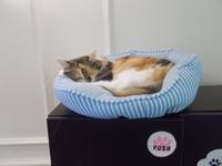 ルー・リード:ライヴ・イン・ベルギー1974 - シェークスピアの猫