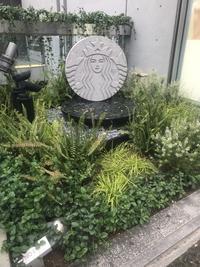 表参道の植栽に惹かれる♡ - 小さな庭 2