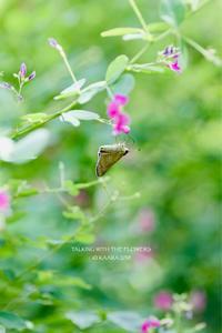 * 萩の花 - Kaara's Eye