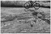bicycle - BobのCamera