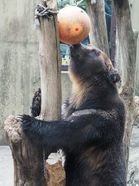 9月5日(木)とんぼ帰り - ほのぼの動物写真日記
