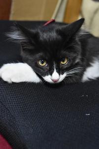 Sweet kitty 7 - 素顔のままで