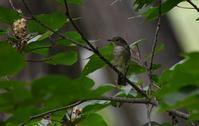 9月の森 - 鳥と共に日々是好日