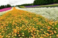 7月の富良野① - Photo Of 北海道大陸