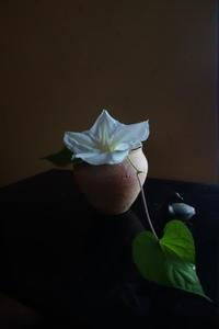 白花夕顔 - g's style day by day ー京都嵐山から、季節を楽しむ日々をお届けしますー