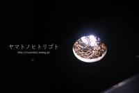 巣 - yamatoのひとりごと