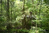 森の中のシャンデリア / a chandelier in a forest - Seeking Light - 光を探して。。。