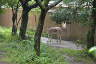 ミンミン - 動物園へ行こう
