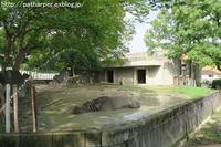 2019年8月東山動物園その1 - ハープの徒然草