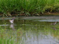 水鳥2羽 - 季節の映ろひ