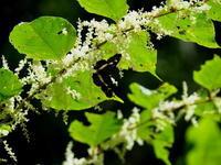 大和路小遠征再チャレンジ - 紀州里山の蝶たち