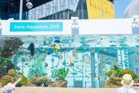 都会の真ん中の水族館Sony Aquarium 2019 - エーデルワイスブログ