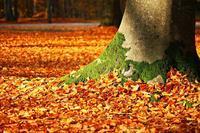 一足先に紅葉スポット紹介していきます!!戸川みゆきささん♪ - 今年は紅葉を観に行こう♪戸川みゆきの秋の散策ブログ