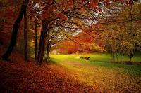 実は10日しかない?!紅葉の見ごろ!戸川みゆきさん♪ - 今年は紅葉を観に行こう♪戸川みゆきの秋の散策ブログ