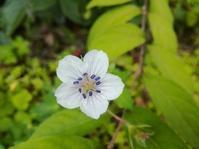小さな花の物語… - 侘助つれづれ