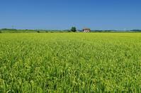 故郷の田んぼと夏の空-2 - 自然と仲良くなれたらいいな2
