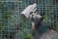 2019年8月東山動物園その2 - ハープの徒然草