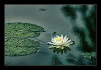 雨の池 - Desire