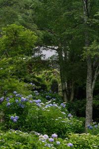 奥河内の紫陽花②~河合寺地区 - katsuのヘタッピ風景