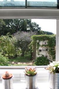 ヘンリーヅタ恐るべし&ブッドレア再び - ペコリの庭 *