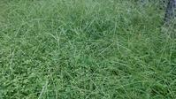 手で芝刈り - うちの庭の備忘録 green's garden