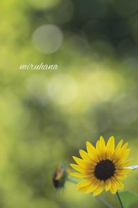 湘南ダイヤモンド富士WEEK。 - MIRU'S PHOTO