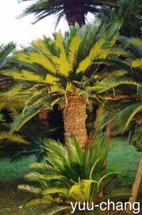 幻想庭園ライトアップされた蘇鉄 - 下手糞でも楽しめりゃいいじゃんPHOTO BLOG