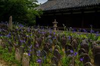 元興寺の桔梗 - 鏡花水月