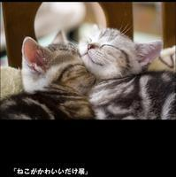 ねこがかわいいだけ展☆渋谷ヒカリエ - 猫の部屋