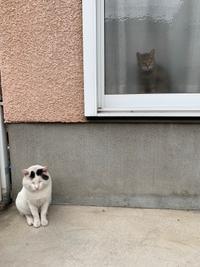 見送られた - ぶつぶつ独り言2(うちの猫ら2018)