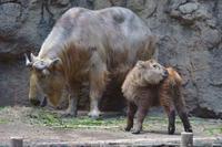 ハマ - 動物園へ行こう
