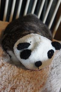 今日のはぁちゃん【パンダです??】 - 森小日記(もりしょうにっき)