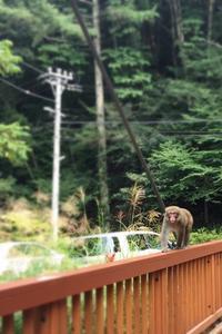 夏でも猿に会える!@長野 - うつわ愛好家 ふみの のブログ