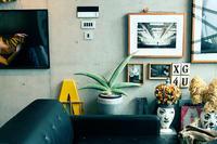 サンセベリア コレクション③( バナナ / サムライドワーフ) - コーポラティブハウスの生活