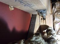 耐震診断調査のため和室の天袋から、天井裏に入りました。 - 設計事務所 arkilab