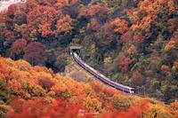 戸川みゆきさん2019紅葉おすすめスポット「高尾山」@東京都八王子市 - 今年は紅葉を観に行こう♪戸川みゆきの秋の散策ブログ