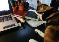 三毛猫ひかちゃん-87- - 殿様の試写室